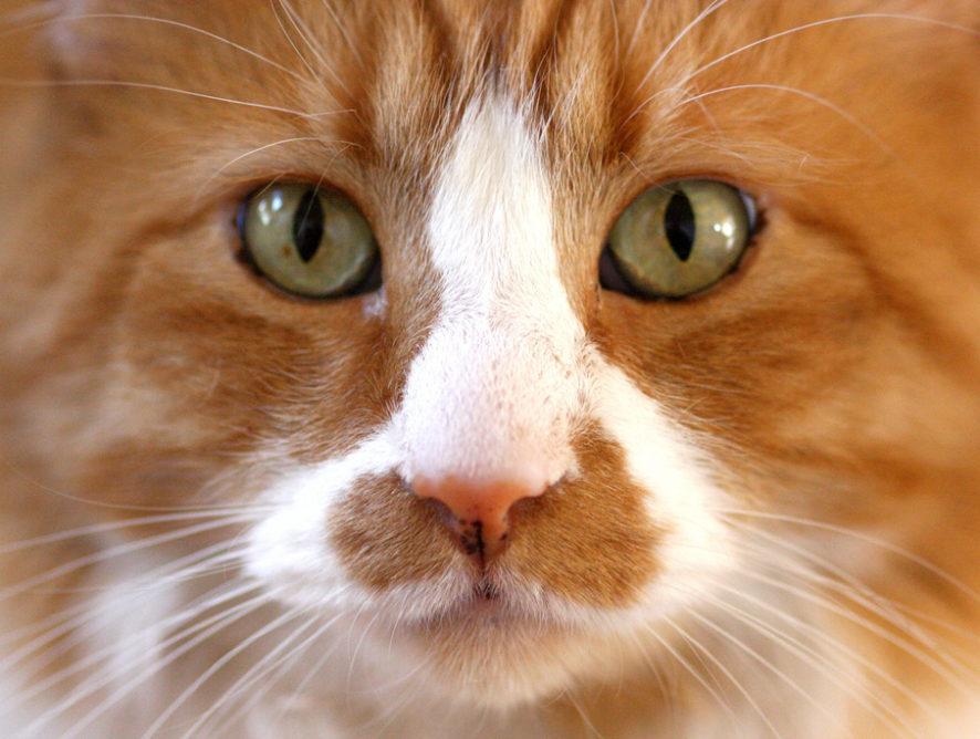 Every day is Caturday! O internetowych dniach tematycznych