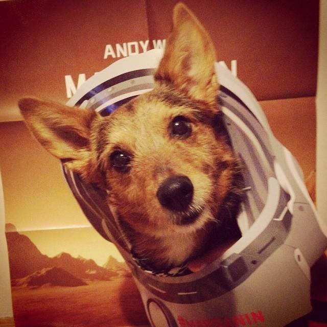 pierwszy_pies_w_kosmosie